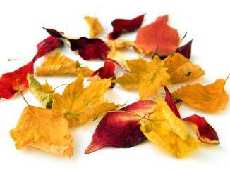 Bunte Blätter sorgen für Freude im Herbst - müssen aber auch entsorgt werden. Foto: djd