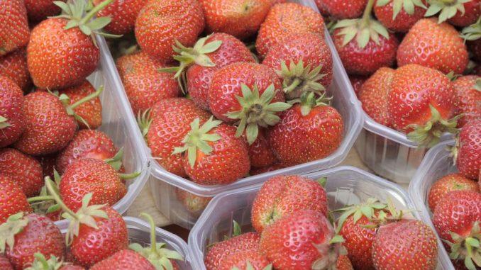Frisch gepflückte Erdbeeren liegen in Sachsen zum Verkauf bereit. Foto: Bernd Settnik/Archiv