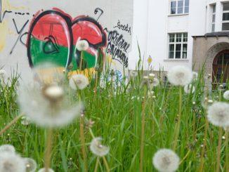 Eine mit Graffitis versehene Wand eines Hauses in Chemnitz. Foto: Sebastian Willnow
