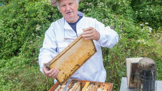 Imker Fritz Woitaß (76) kümmert sich um die Bienen auf Schloss Wackerbarth. Foto: Robert Neumann