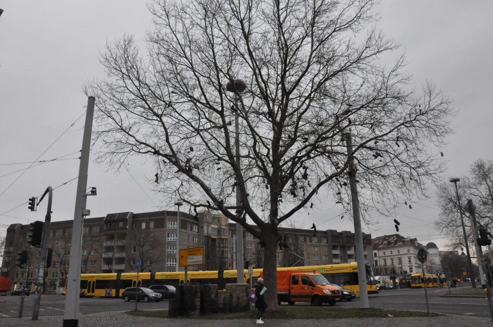 Der Dresdner Baum der Wünsche