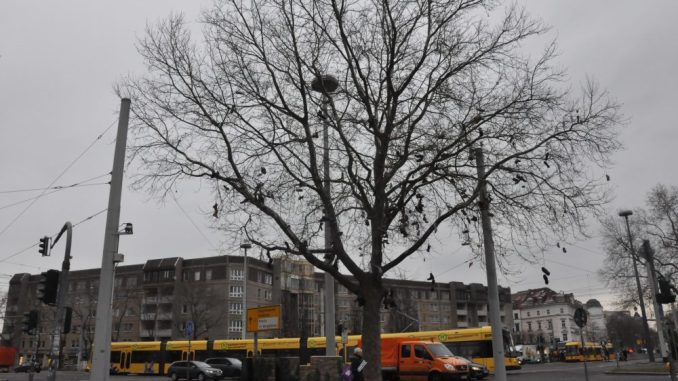 Am Albertplatz steht Dresdens erster Shoetree. Foto: Una Giesecke