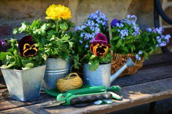 Blumen stehen in Blumentöpfen.