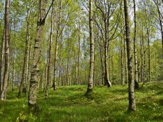 So schön ein Spaziergang im Wald ist: Zecken sind eine Gefahr. Foto: Pixabay