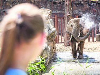 Saniertes Außengehege für die Elefanten im Zoo Dresden. (Foto: Sven Ellger)