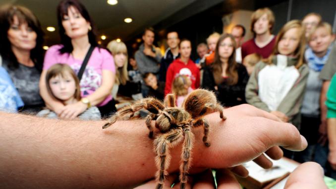 Spinnen verbreiten oft Angst und Unbehagen. Foto: PR