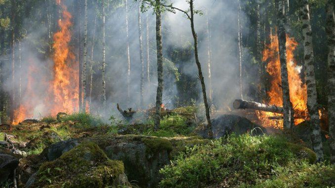 Bei der Trockenheit ist die Gefahr von Waldbränden besonders hoch. Foto: Pixabay