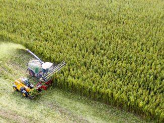 Mit einer eigens entwickelten Erntemaschine erntet ein Landwirt Cannabis. (Foto: Jan Woitas/dpa)