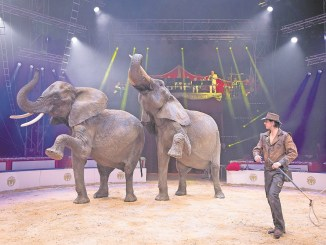 Ein spektakuläres Programm wartet auch in diesem Jahr auf die Zirkusbesucher. Foto: Sven Ellger