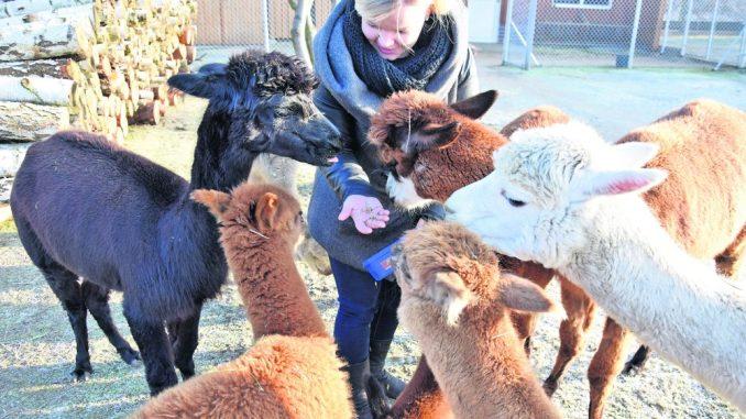 Sind immer für einen Spaß zu haben und ihr Fell eignet sich bestens für hochwertige Produkte: Alpakas