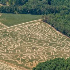 A Developing Corn Maze near Sanford?