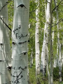 Signs on the trees