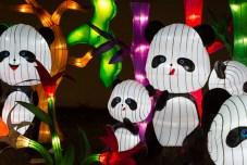 Pandas - Chinese Light Festival