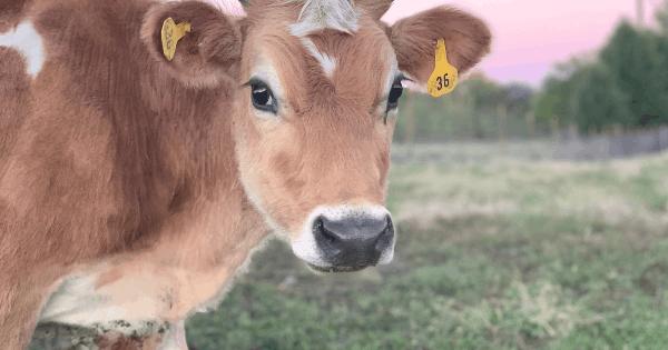 Daisy – Our Four Legged Friend
