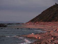 Nede på stranden, måger og turgængere