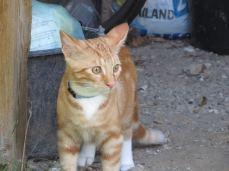 Hvis katteansigter har udtryk, så er dette en måben