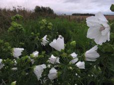 og for at hvide blomster ikke bliver for hvide (og uden detailler)