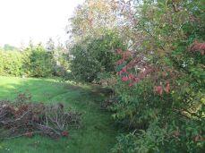 Efterårsbladene lyser