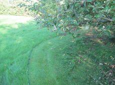Nu er det tydeligere - det er synd at klippe græsset