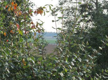 Albuerne på bordet, 12 x zoom, men autofokus indstiller på busken i forgreunde