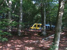 Afbrudt: skovens dybe stille ro