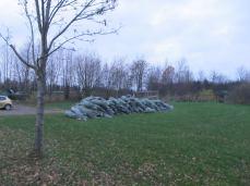 Juletræer klar til salg
