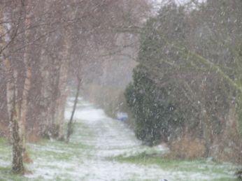 2. Februar. Stien langs jernbanen med markerne på den anden side; det sner, men her på egnen faldt kun et meget tyndt lag