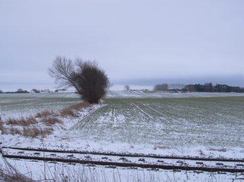 Men på marken falder sneen ned mellem planterne
