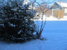 I dag faldt mere sne, fuglene har tømt frø-beholderen