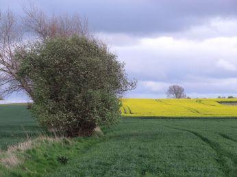 12. Maj - man ser hegnet er ved at grønnes