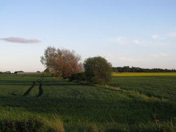 1. Juni - marken til venstre står også pænt