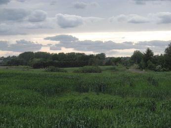 Et blik ud over marken mod vest, med zoom ses krattet i vandhullerne tydeligt - og der ses et udrænet hul i forgrunden