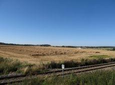 19.August - der er høstet mange andre marker, men resterne her får lov at ligge til der bliver tid