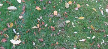Her ses i nærbillede langstrået græs versus klippet, hvor mosset dominerer - nu får det lov at ligge til foråret