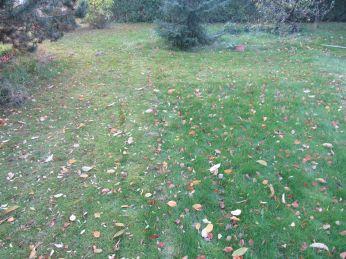 Skulle nok ikke have slået græsset, nu vinder mosset