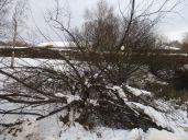 Ved Mosen også knækkede grene