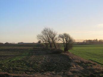 1. December - grene efter beskæringen af hegnet