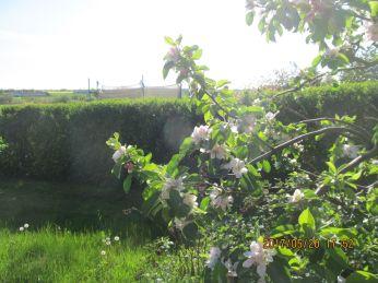 Det liggende æbletræ, Grieves