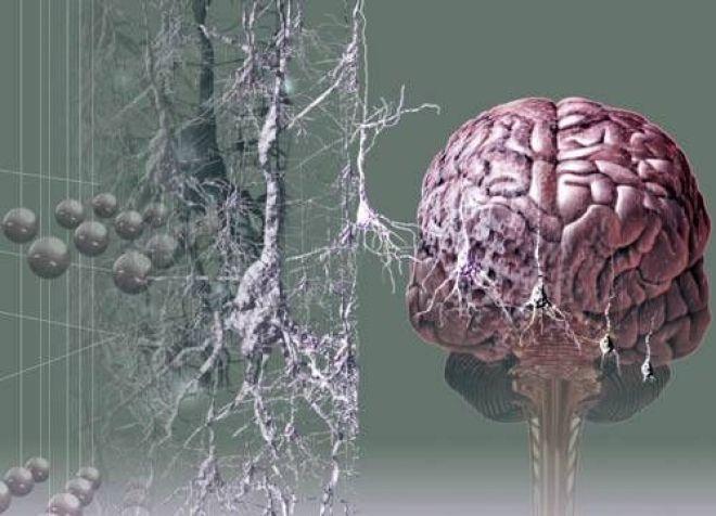 Картинки по запросу Ученые создали нейрочип