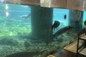 【山梨県 観光】山梨県立富士湧水の里水族館