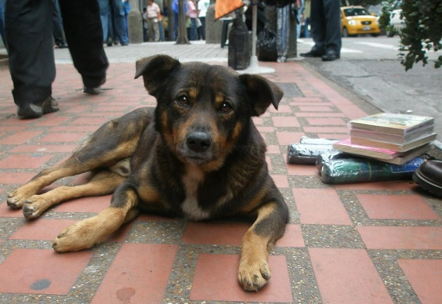 dog 1192725 960 720 - 3 solutions to solving the problem of stray dogs in the US