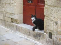 Stylish Valletta