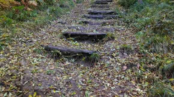 Old steps covered in signs of autumn