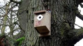 roseberry-topping-bird-box-12