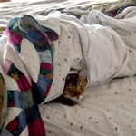 12 p.m. —Zeona snuggles under covers in Glenham, S.D., on Tuesday, April 14, 2020.