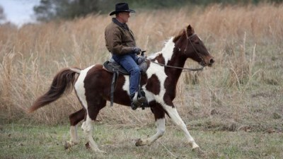Roy Moore on his horse