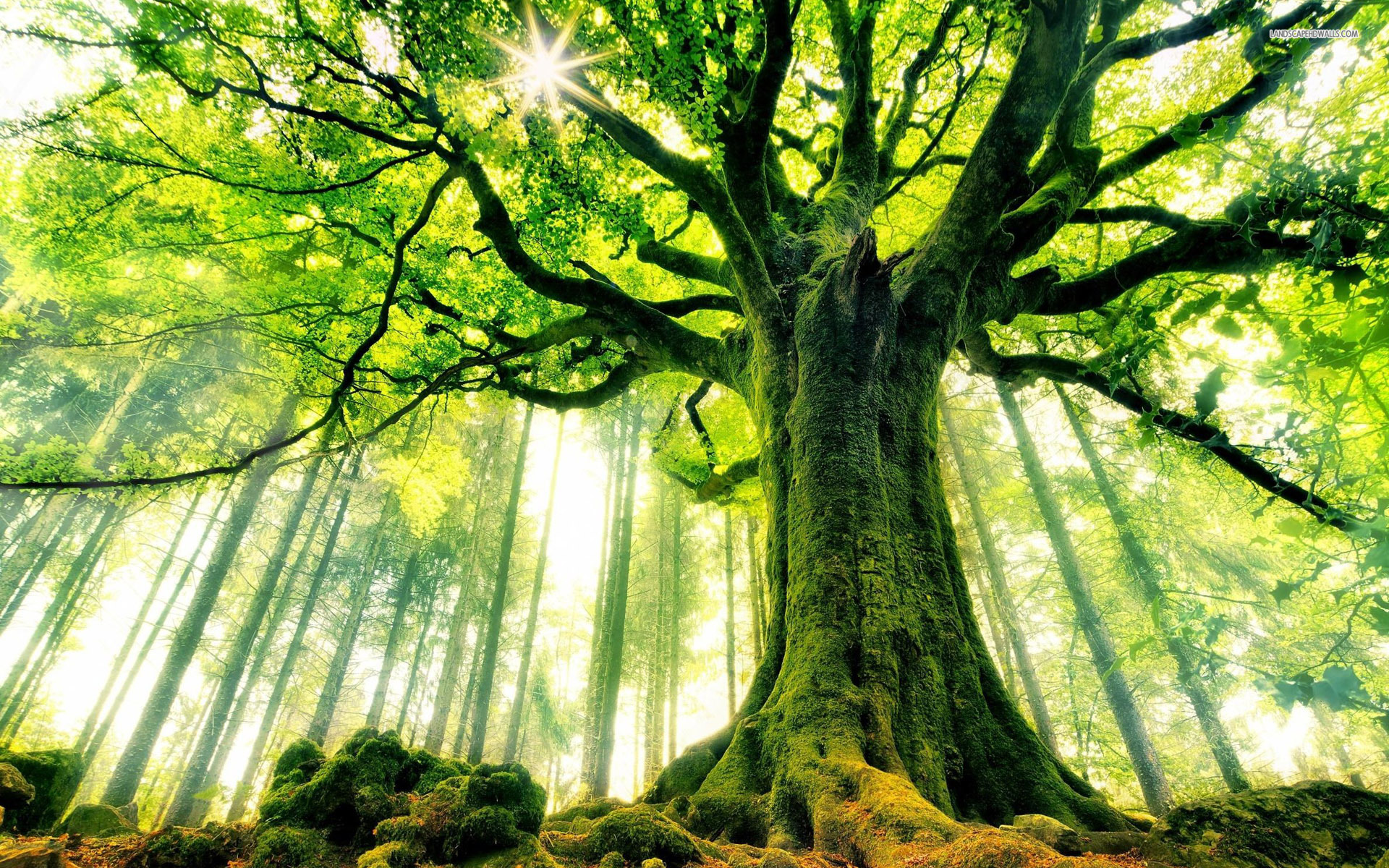 Image result for pictures of trees