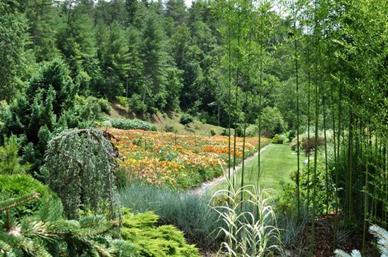 Blue Ridge Daylilies