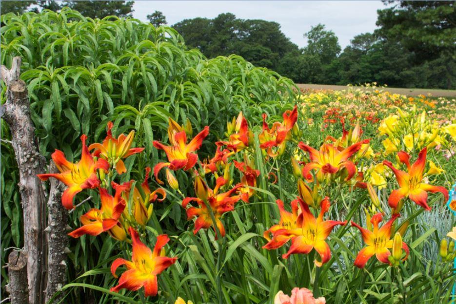 Scene from Sterrett Garden