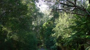 Lush forest - can you spot Stephen?